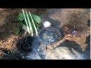 Primitive Technology Looking For Food (Snail)* / Survival Skills Primitive / 22.10.2017