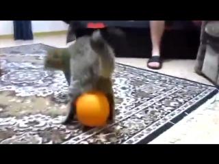 Смешные кошки #6. Кот и воздушный шарик, прикол!) - YouTube