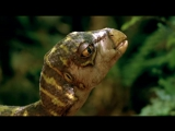 Прогулки с динозаврамиWalking With Dinosaurs 5 серия (Озвучка Николая Дроздова)