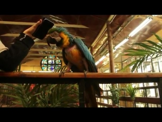 Калининградский зоопарк Попугай Моника танцует под песню Шнура