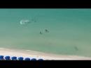 Охота акулы на пляже
