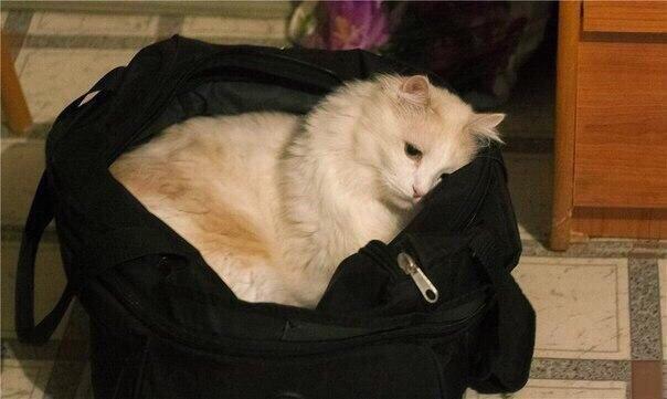 Настроение залезть в дорожную сумку и чтоб меня увезли куда подальше