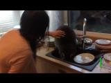 Енот пробрался в дом и перемыл посуду