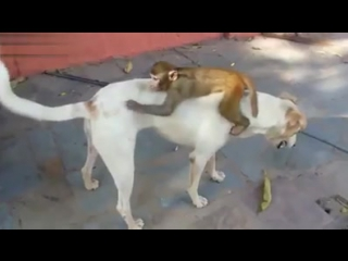 funny animal video