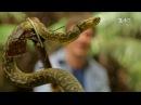 10 серия Секрет долголетия японцев и охота на змею. Япония. Мир наизнанку - 10 серия, 9 сезон
