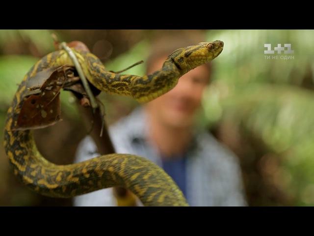 Секрет долголетия японцев и охота на змею Япония Мир наизнанку 10 серия 9 сезон