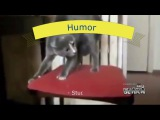 Fighting cats  Cats   Seals   Funny video 2017