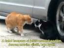 Mluvící kočky (CZ SUB)