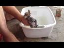 Как мыть котят / видео про кошек, котов, котят.