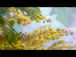 Танец цветов под прекрасную мелодию. Любовная история.