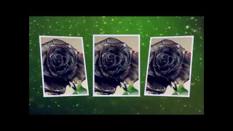 Чёрная роза исп Алика Смехова Слава Медяник