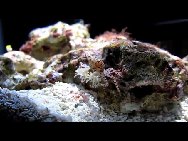 Underwater conga beat!