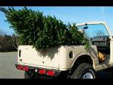 Простой способ транспортировки черенков и растений (на примере шалфея)