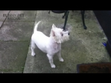 Dogs Meets Owner After Long Time ★ TRY NOT TO CRY (HD) [Funny Pets]