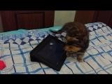 Котёнок Фрида и мышки - весело!