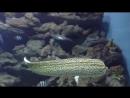 Подводный мир океана Гигантские Хищные Рыбы Мурена. Animals fish