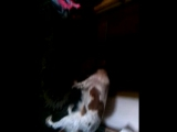Зара и Шакира