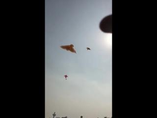 Птицы из пены / Kite Festival __ Make A Flying Bird Using Foam
