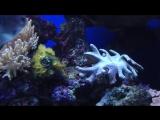 Музыка саксофон. Ночной океан. Морской риф. Animals  fish