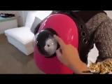 Space Pets - Рюкзак переноска для животных