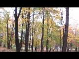 17 октября Золотая осень в парке у Балтийской жемчужины