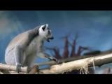 Контактний зоопарк у Кран розваг