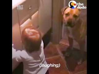 Малыш и собака