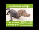 Контактный зоопарк (ТЦ Пассаж с 5 по 17 апреля)