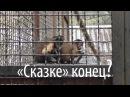 «Проще со львами и тиграми, чем с «гоблинами» во власти» – Олег Зубков о закрытии зоопарка «Сказка»