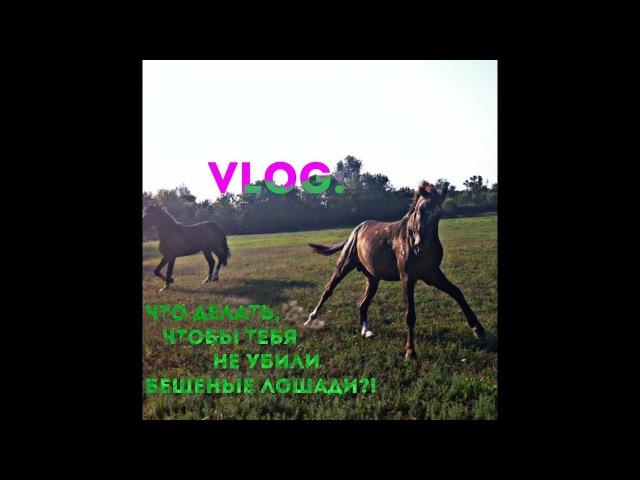 Vlog: Что делать, чтобы тебя не убили бешеные лошади?!