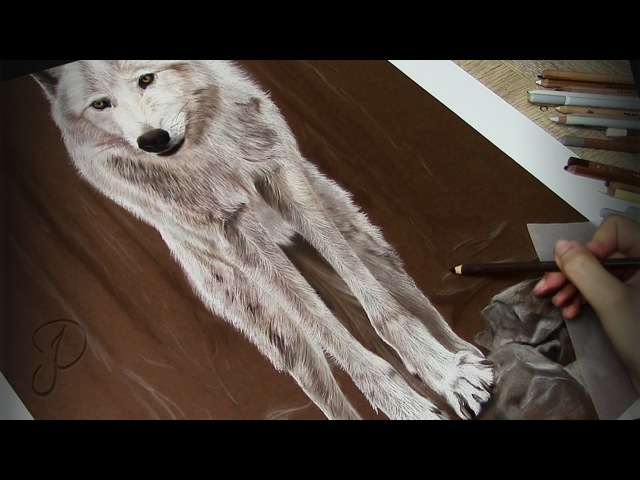 Realistic White Wolf - Pastel Painting | Speed Art Drawing