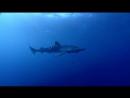 03 BBC Голубая планета Открытый океан