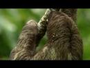 BBC «Как устроена природа (1). Джунгли» (Познавательный, животные, 2012)