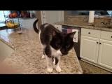 Кот Джек с самым низким в мире голосом