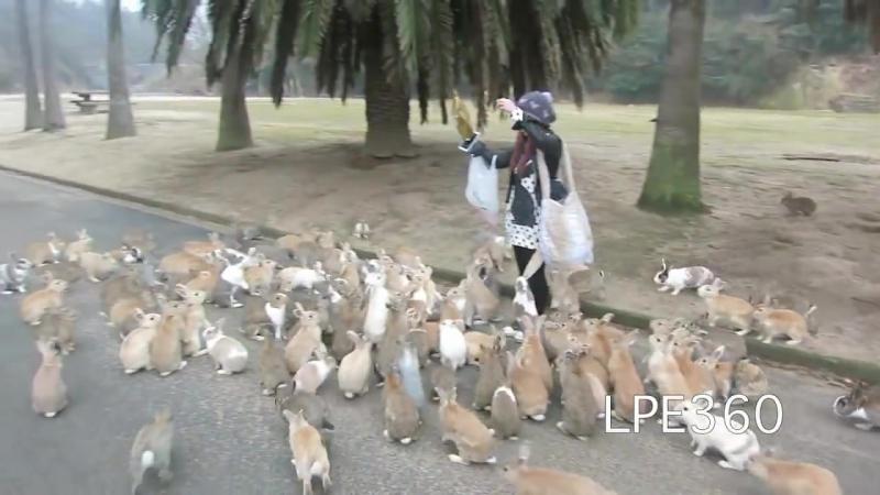 Нападение кроликов
