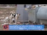 Майже 200 тис. грн. витратила Ужгородська міськрада на відлов безпритульних тварин.