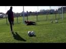 Cebotari Lucian video CV Goalkeeper