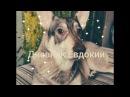 Дневник моей собаки Дуни ||Все о дневнике 1 часть