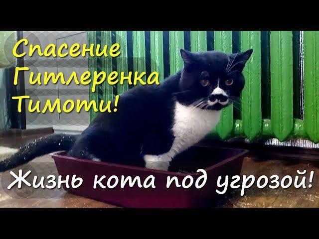 Кот не может пописать МОЧЕКАМЕННАЯ БОЛЕЗНЬ у кота. Спасение Тимоти от СМЕРТИ!