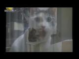 Угарная озвучка животных.mp4