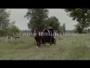 «Виски» - Би-2 feat. John Grant (The Czars, Midlake)