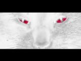 Cheb Khaled - Aicha(Alexander Holsten &amp Andrey Vertuga Remix)