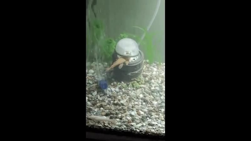 When in aquarium completely bored