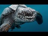 Топ 5 самых больших животных на планете
