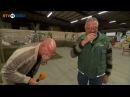 Как смеется куриный фермер