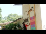 Jumping DogsChampion Pit Bull Can Leap Up Four Metre Walls