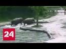 В Южной Корее родители спасли тонущего слоненка