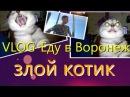 VLOG-Еду в Воронеж, злой котик .