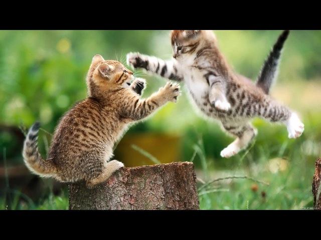 Тайная жизнь кошек. Интересные Факты. Дикий нрав кошек. Познавательное видео. Вс ...
