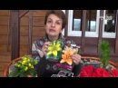 Как выбирать луковицы лилии Подарок на 8 Марта